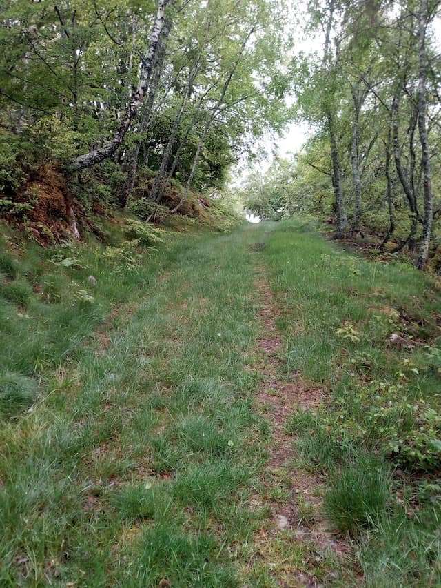 Chemin dans la forêt - Un lieu propice à l'écriture de son carnet d'aventure