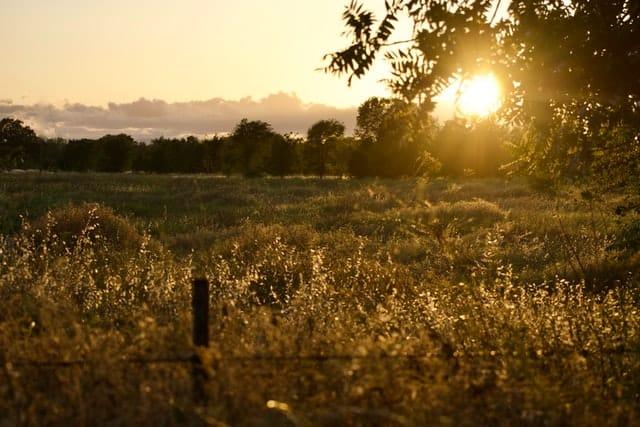 Levé de soleil sur une prairie